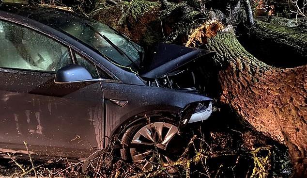 Két családot mentettek meg a Teslák, amikor megállították magukat a lezuhanó fa előtt